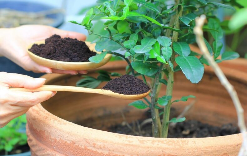 Come Utilizzare I Fondi Del Caffe Giardino