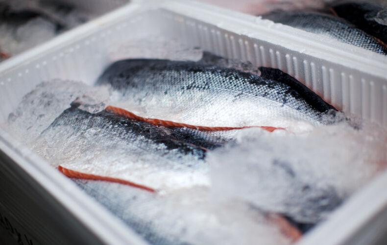 Come Sfilettare Il Pesce Conservare Pesce Sfilettato