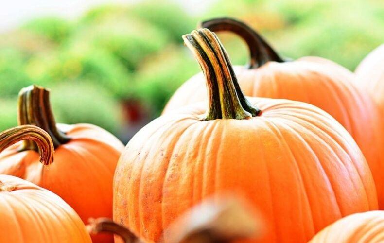 Come Intagliare Una Zucca Per Halloween Scegliere Zucca