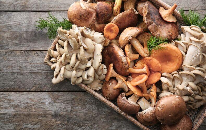 Diverse Varieta Funghi Nel Cesto
